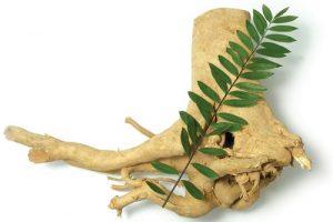 Công dụng của cây mật nhân chữa bệnh gì?