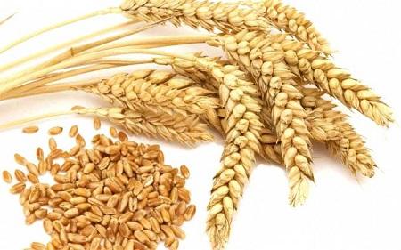 Mầm lúa mạch cũng là thực phẩm giàu kẽm