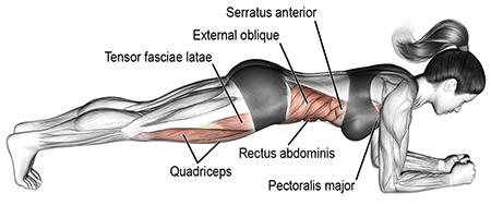 """Plank được coi là một trong những """"bài tập thần thánh"""" trong việc giảm mỡ bụng"""